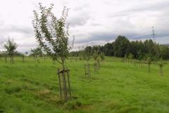 2012: Blick in die Streuobstwiese Leuba.