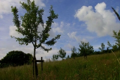 2014: Die Grünlandpflege