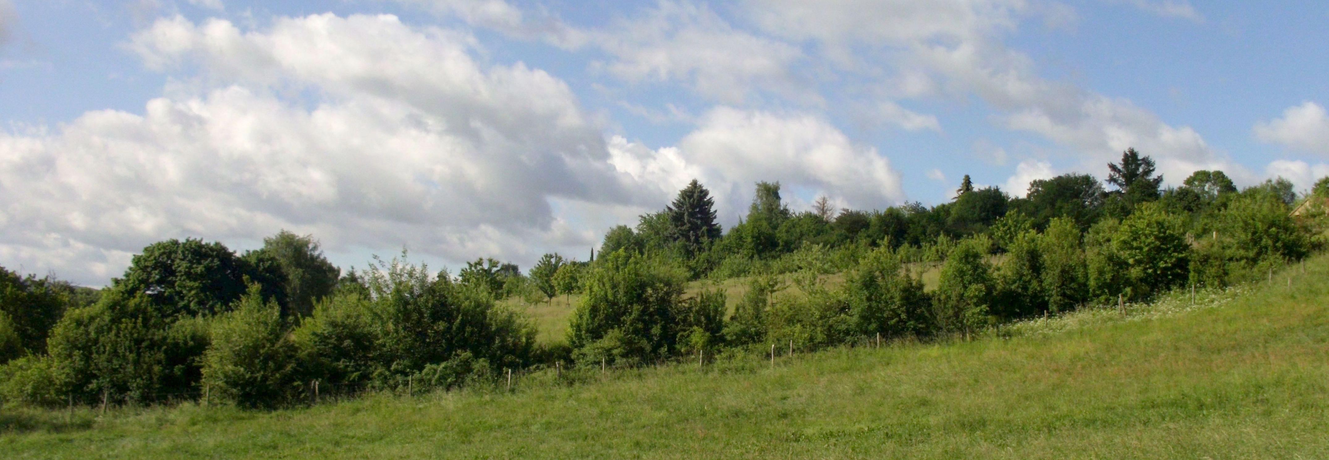 Blick auf die Heckenumrandung des Obstsortengartens der Oberlausitz 2017